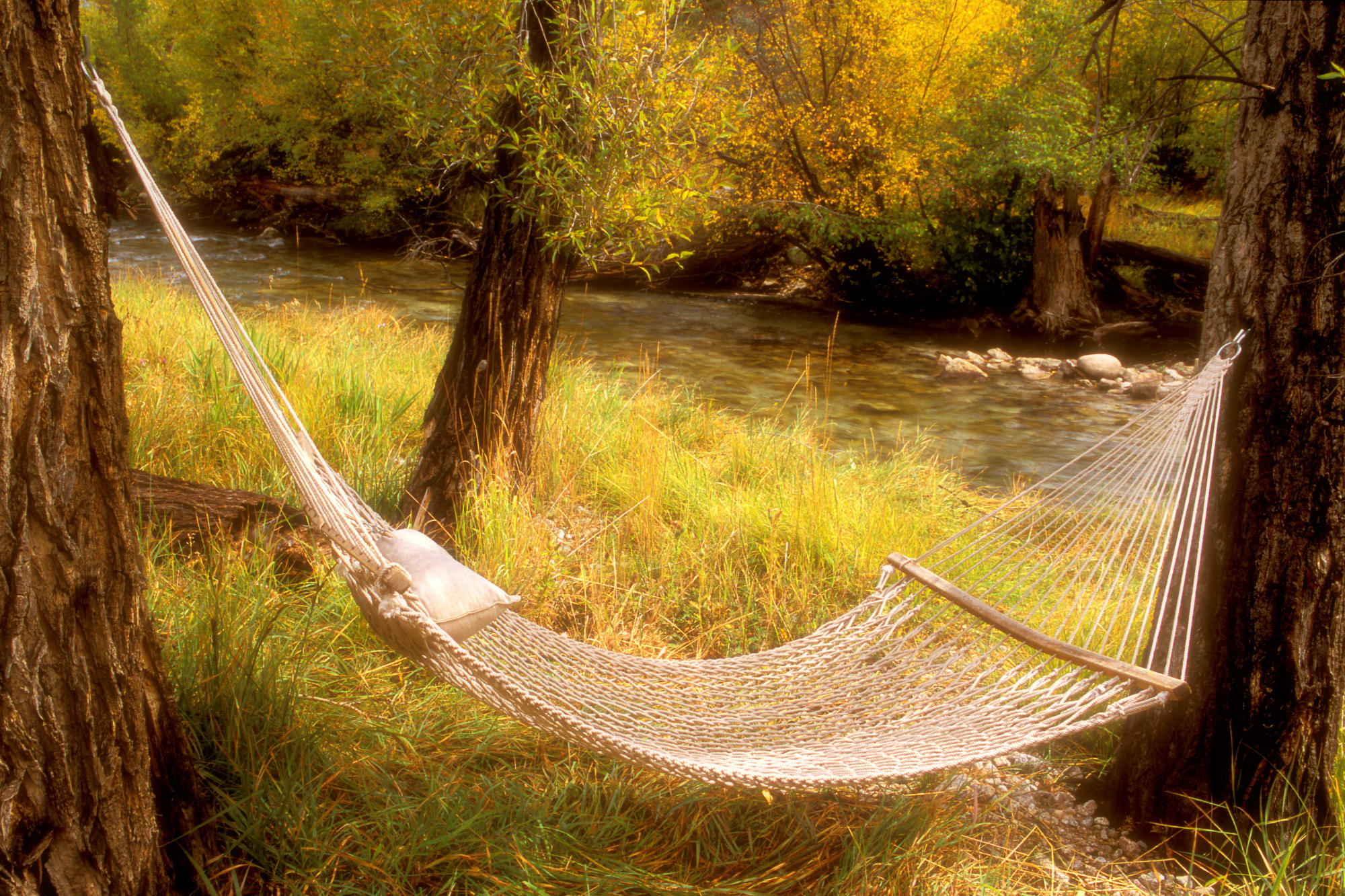 Peaceful Hammock Near A Stream, Colorado