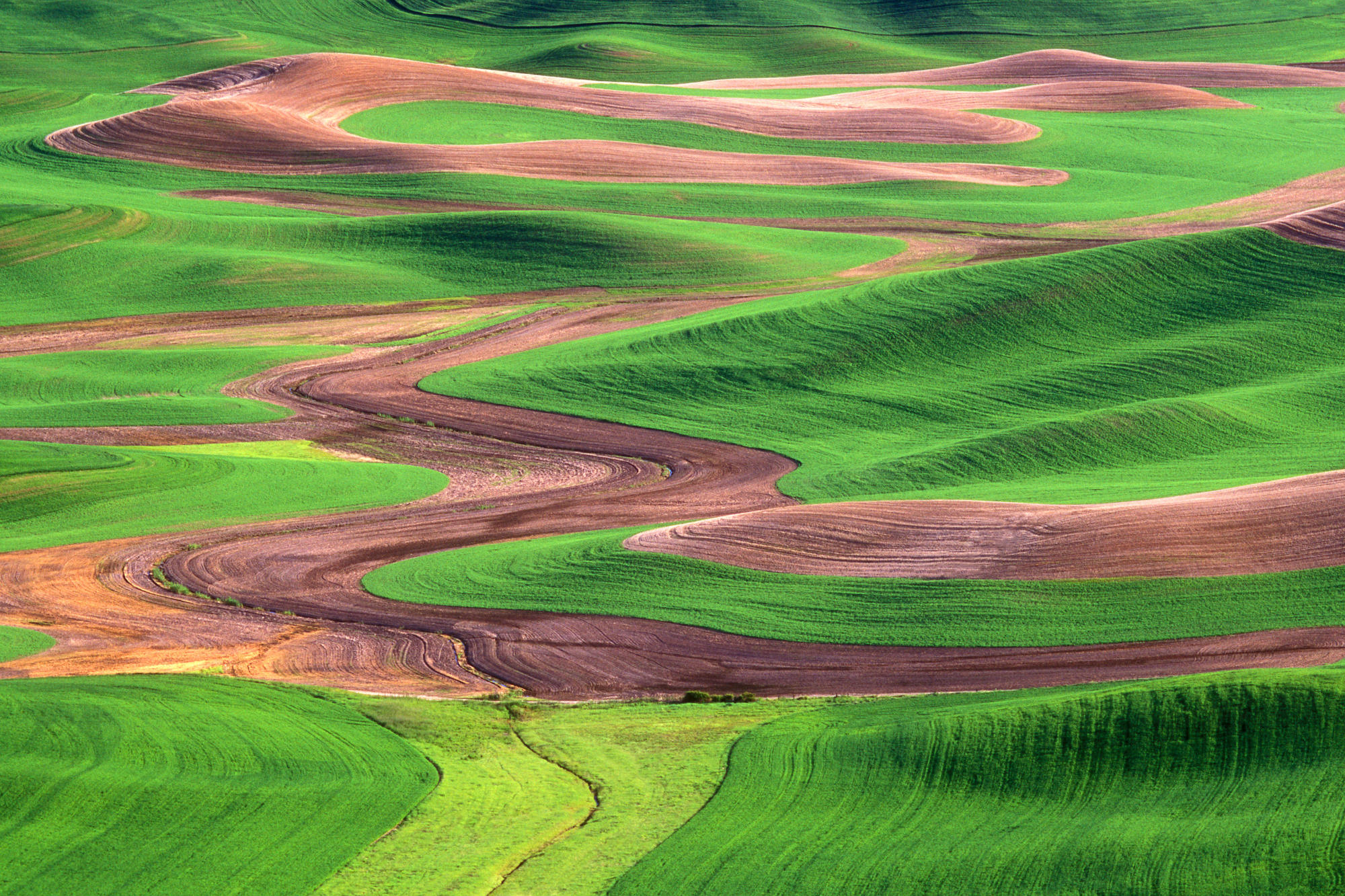 Palouse Hills From Steptoe Butte, Washington