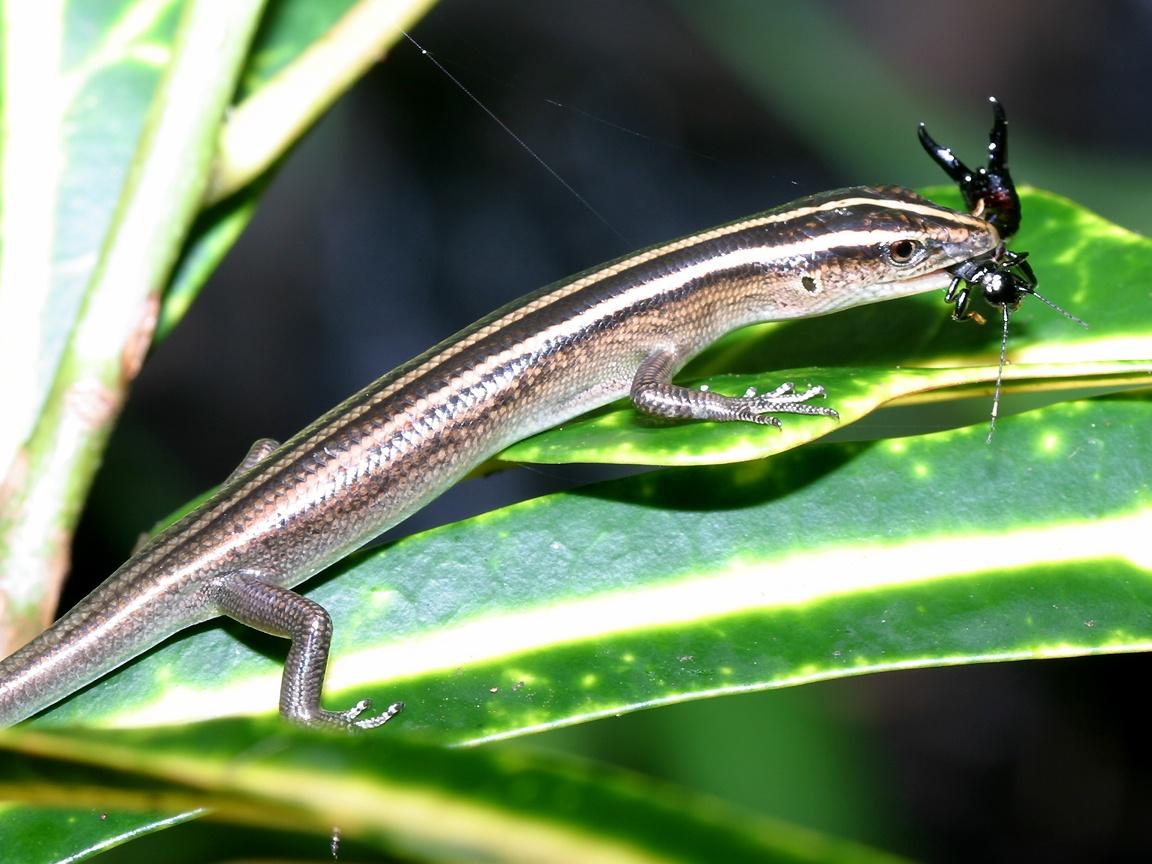 Reptiles (33)