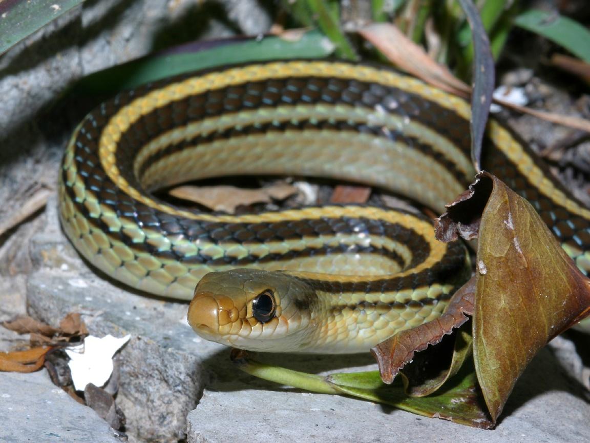 Reptiles (41)