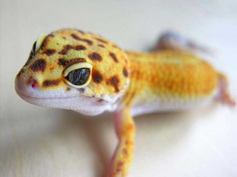 Reptiles (42)