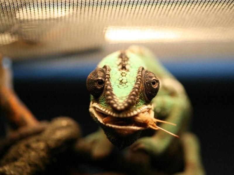 Reptiles (43)