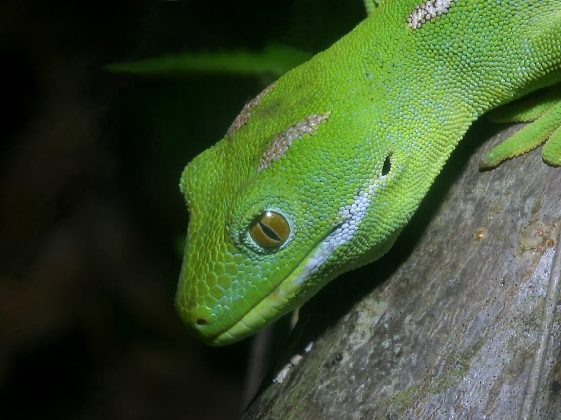 Reptiles (44)