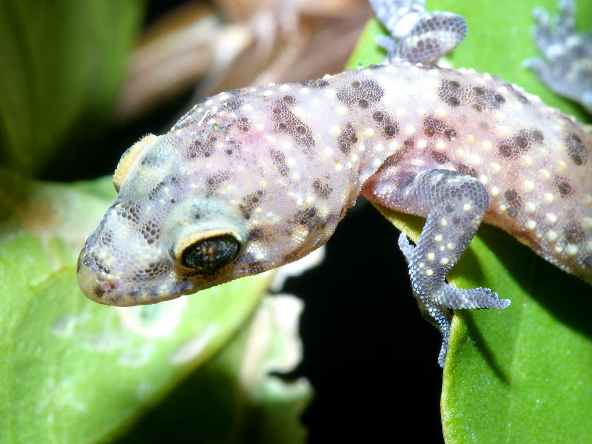 Reptiles (46)