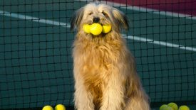 Tennis, Anyone